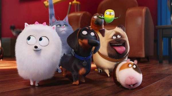 Кадр из мультфильма Тайная жизнь домашних животных